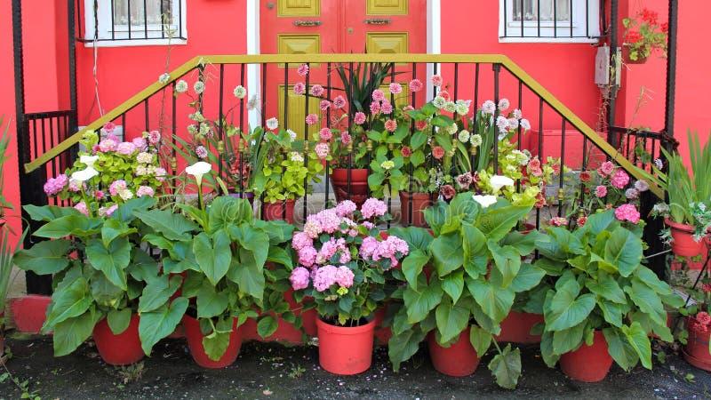 在门前面的很多美丽的花 免版税图库摄影
