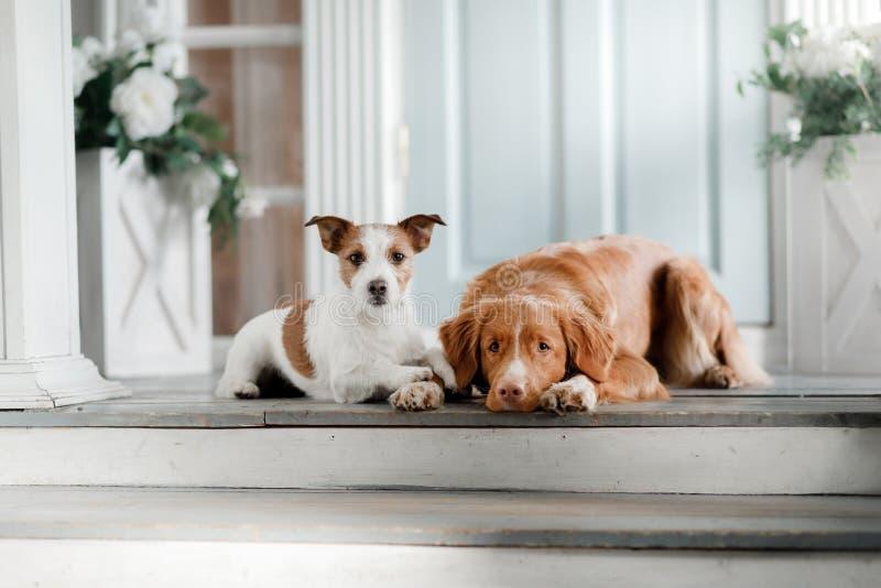 在门廊的两条狗 免版税库存图片