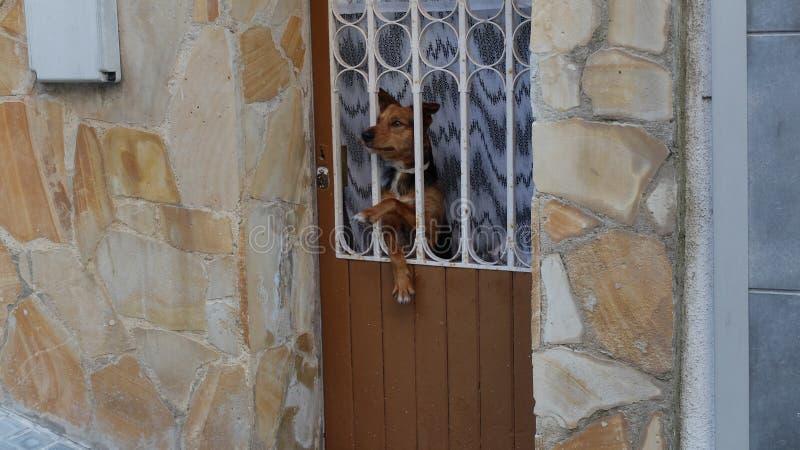 在门的狗 库存照片