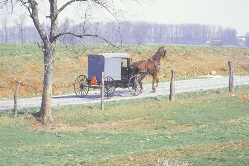 在门诺派中的严紧派的农业社的一个马和支架 库存照片