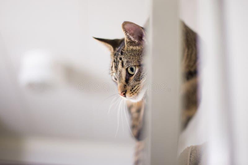 在门2的猫 免版税库存图片