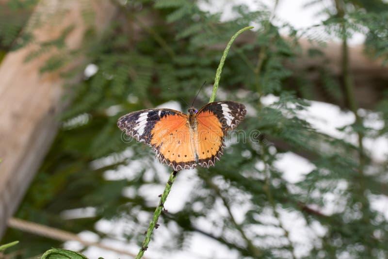 在闪耀的橙色的顶视图自emsbà ¼的一间温室蹒跚而行坐有开放翼的一棵植物ren emsland德国 库存图片