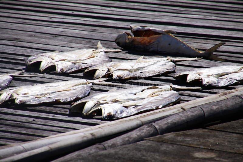 在阳光下放置在木码头,Ko朗塔镇,泰国的干鱼 免版税库存图片