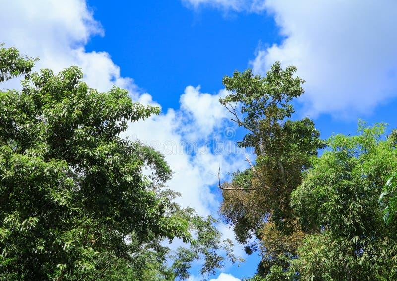 在阳光下的雨林热带风景在夏天有蓝天背景 库存图片