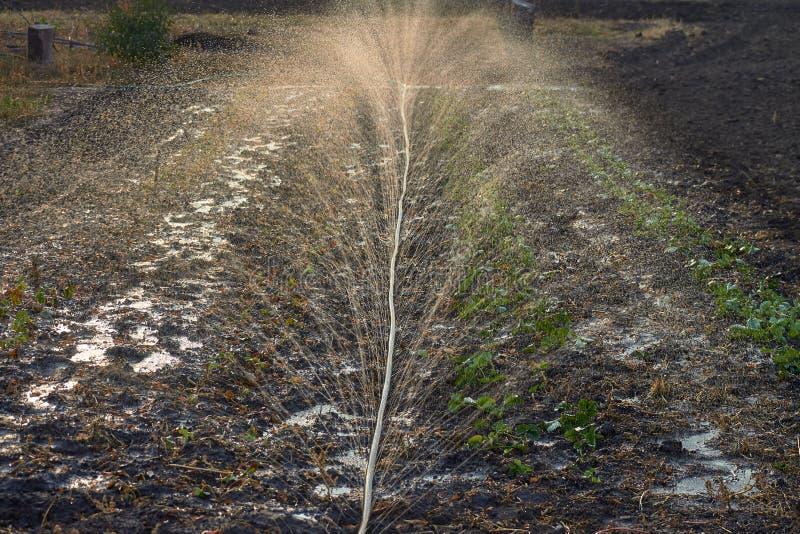 在阳光下飞溅水在灌溉时 土壤湿 免版税库存图片