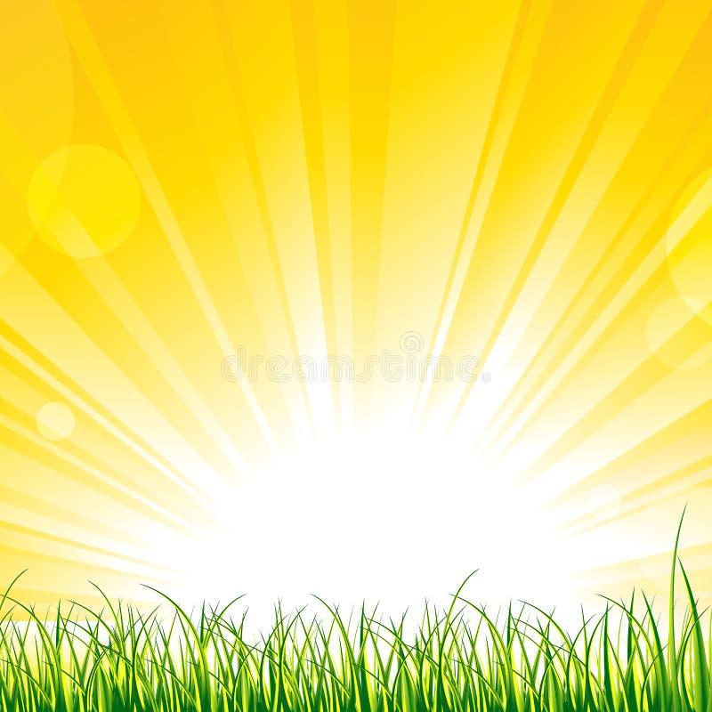 在阳光光芒的草 皇族释放例证