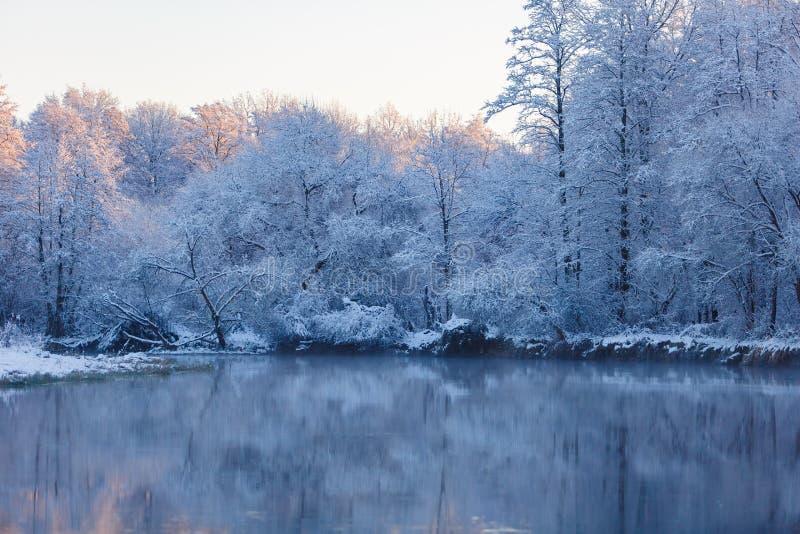 在阳光围拢的湖表面的斯诺伊树 黑色蓝色人行道照片风景定了调子空白冬天森林 免版税库存图片