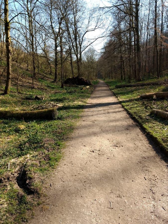 在阳光明媚的春日,路径沿着森林的地面 免版税图库摄影