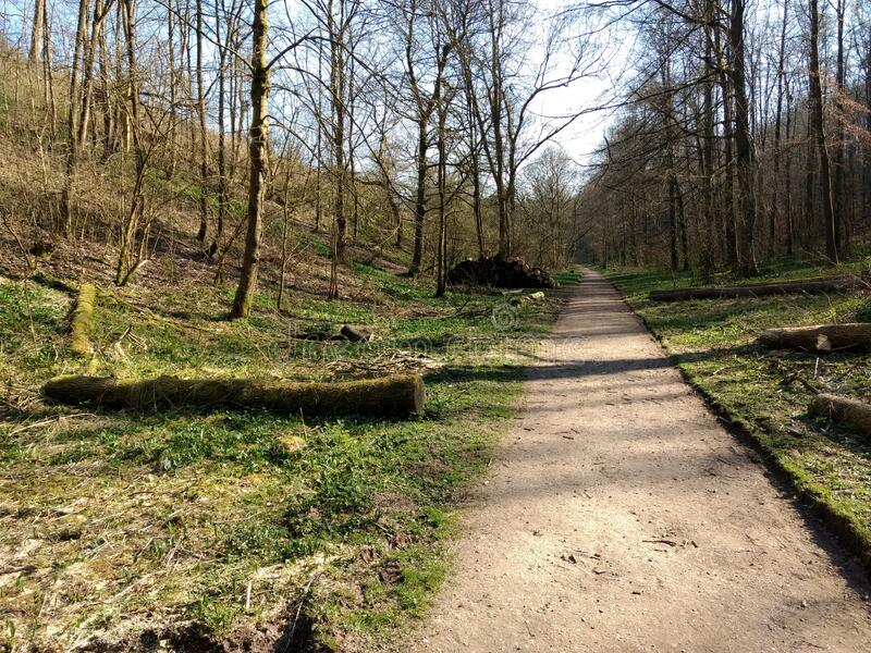 在阳光明媚的春日,路径沿着森林的地面 免版税库存照片
