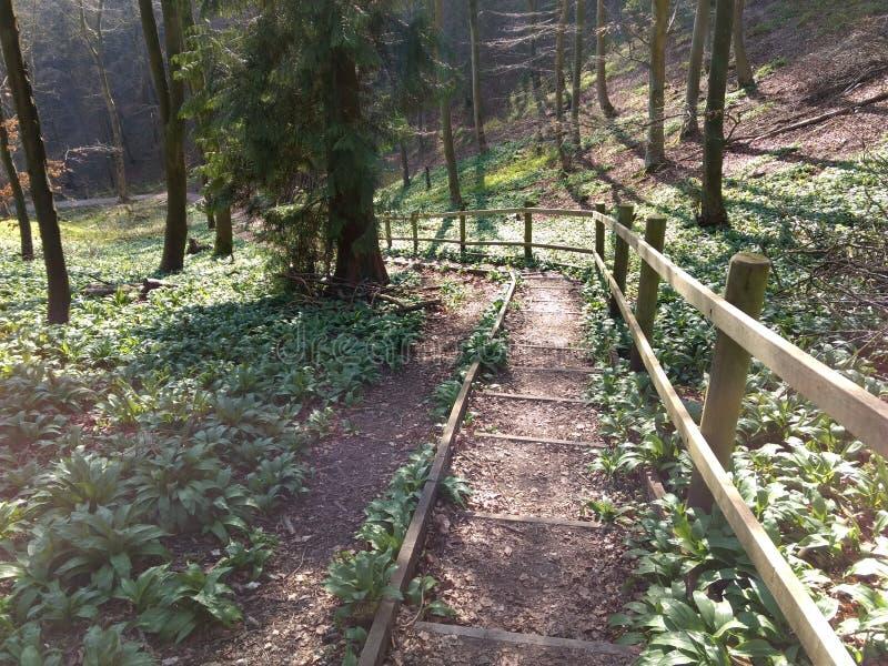 在阳光明媚的春日,通向森林的地面 免版税库存图片