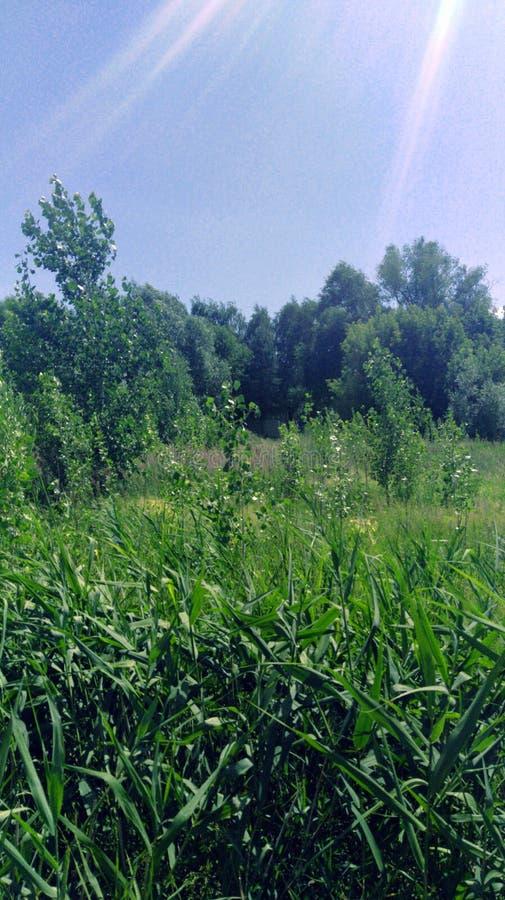 在阳光沐浴的绿色草甸 库存图片