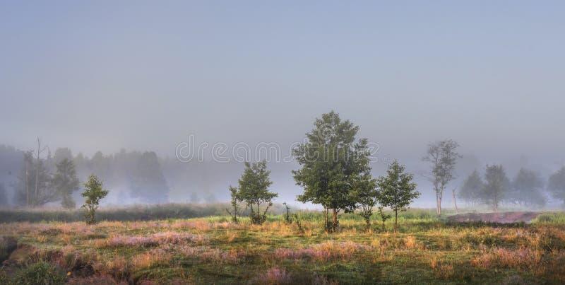 在阳光照亮的绿色有薄雾的草甸的偏僻的树早晨 库存照片