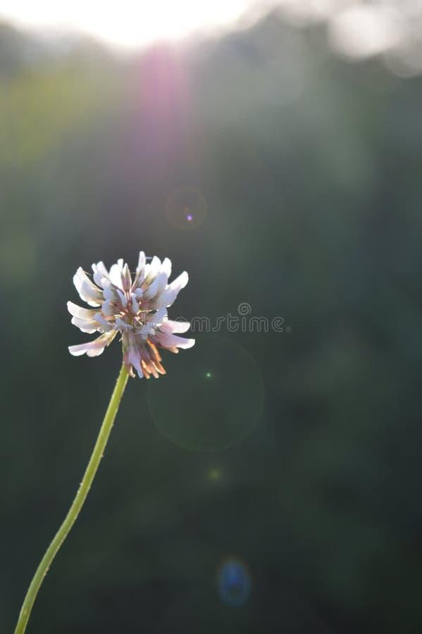 在阳光Jurmala拉脱维亚的绿草 免版税库存图片