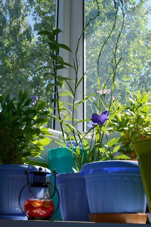 在阳台的许多盆的花 舒适都市庭院在有植物和装饰灯的家 库存照片