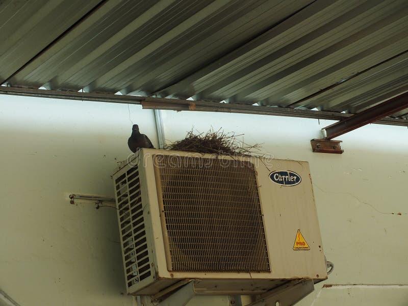 在阳台的鸽子,窗口边缘 免版税图库摄影