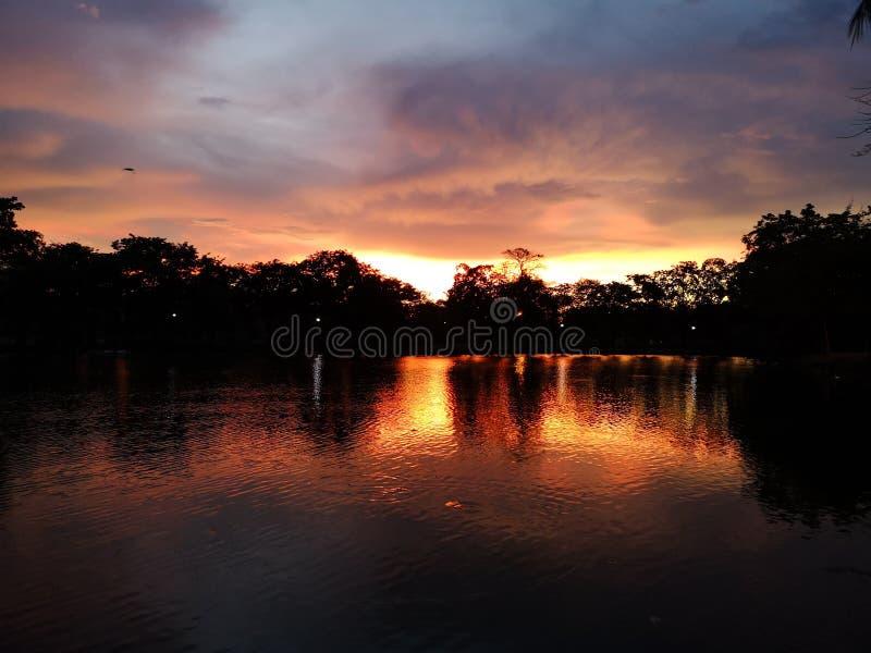 在阴影黑树后的日落晚上反射 免版税图库摄影