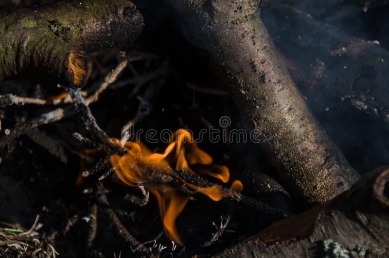 在阵营的火 篝火 库存图片
