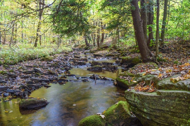 在阿勒格尼山脉的秋天 免版税库存图片