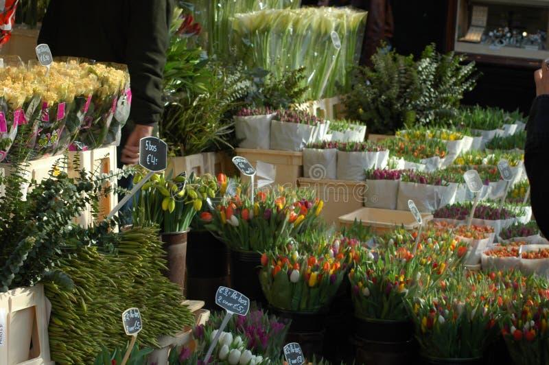 在阿姆斯特丹, Netherland充分开花市场郁金香 库存照片