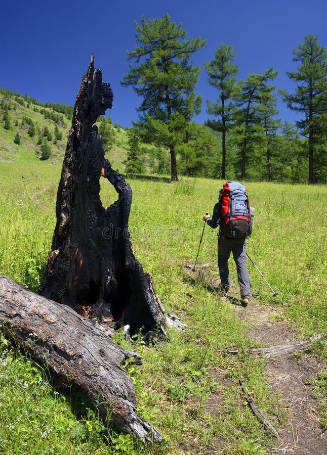 在阿尔泰山、西伯利亚、俄罗斯联邦徒步旅行 免版税库存图片