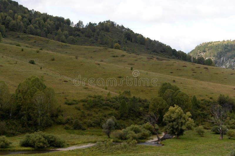 在阿尔泰疆土的将军的taiga解决的附近山风景在西伯利亚西部 库存图片