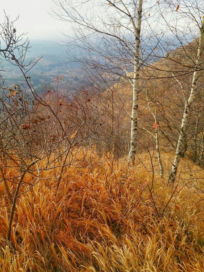 在阿布哈兹山的金黄秋天  免版税库存图片