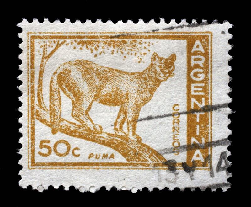 在阿根廷打印的邮票显示美洲狮 免版税库存照片
