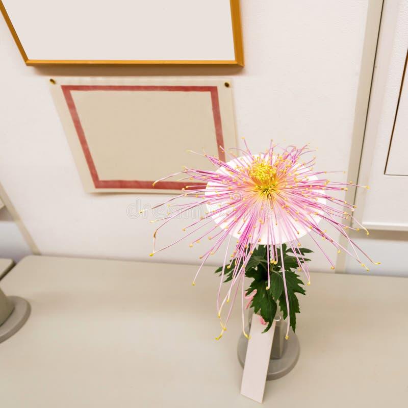 在陈列的紫色菊花,东京,日本 特写镜头 库存图片