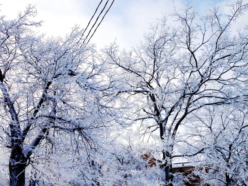 在降雪以后在城市,圣彼德堡,俄罗斯 免版税库存图片