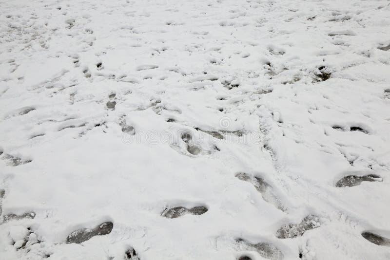 在降雪以后的波浪雪表面 免版税库存照片