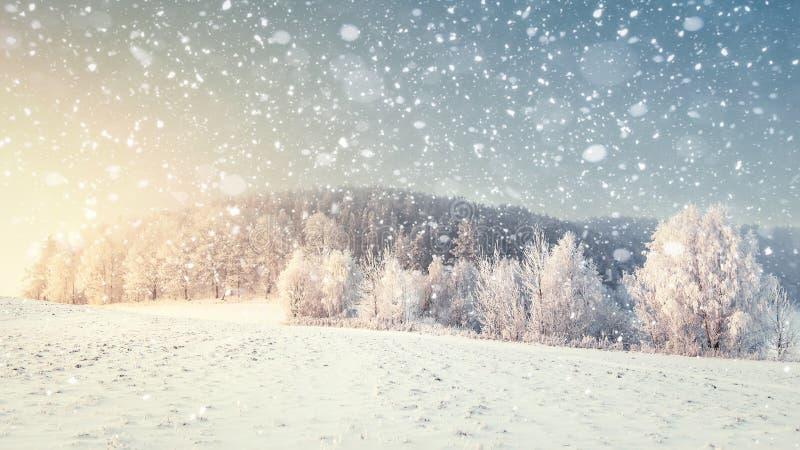 在降雪的田园诗冬天风景 圣诞节和新年时间 雪花在有冷淡的树的多雪的草甸落 免版税库存图片
