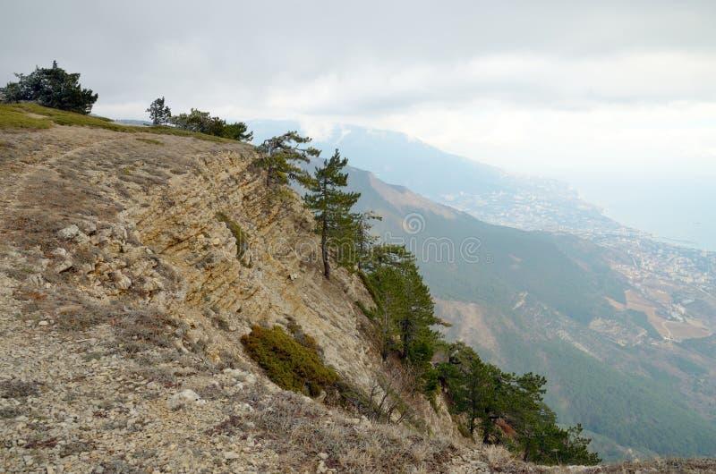 在陡峭的落矶山脉的常青杉树倾斜 库存图片