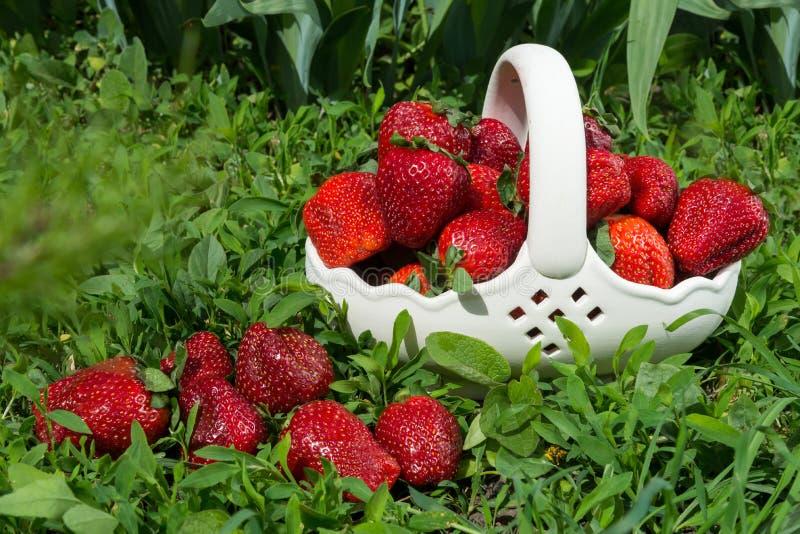 在陶瓷篮子的草莓在草 免版税图库摄影
