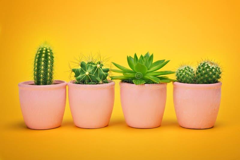 在陶瓷罐时尚设计的创造性的布局仙人掌集合 仙人掌最小的夏天静物画概念 时髦明亮的颜色 库存图片