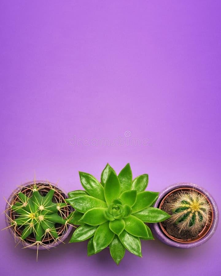在陶瓷罐顶视图的绿色仙人掌多汁植物与在淡色桔子背景的拷贝空间 最小的概念 平的位置 免版税库存照片
