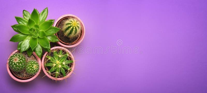 在陶瓷罐顶视图的绿色仙人掌多汁植物与在淡色桔子背景的拷贝空间 最小的概念 平的位置 库存图片