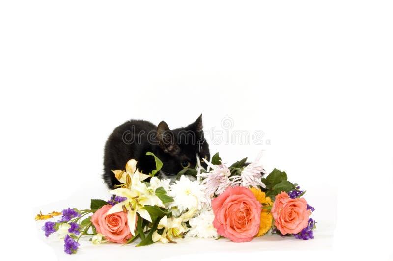 在隐藏小猫的花之后 库存图片