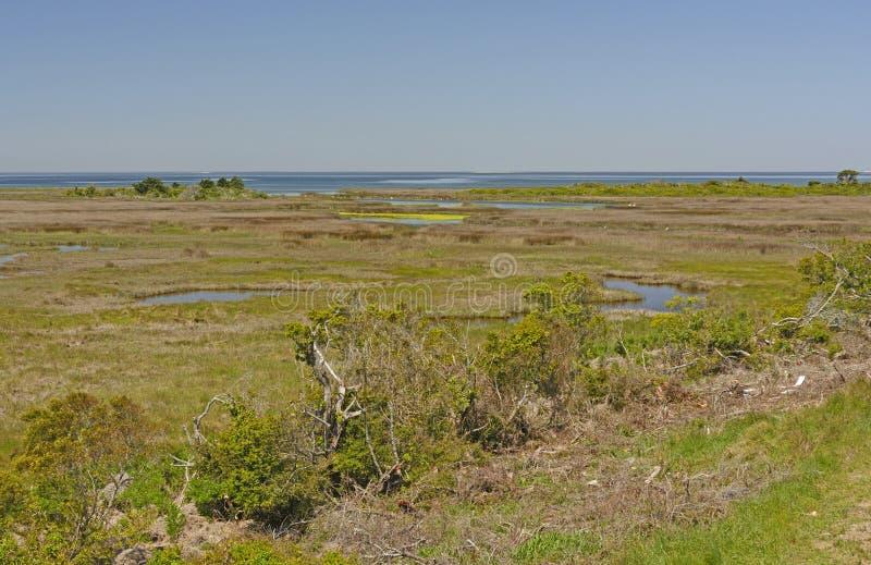 在障碍海岛上的沼泽地 库存图片