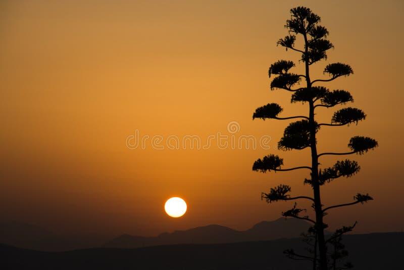 在雅典的日落在希腊 库存图片
