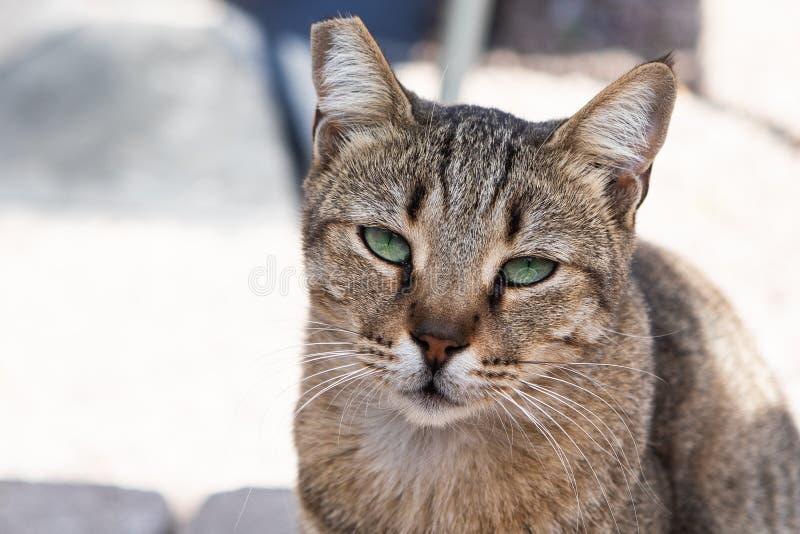 在雅典街道上的离群猫  免版税库存图片