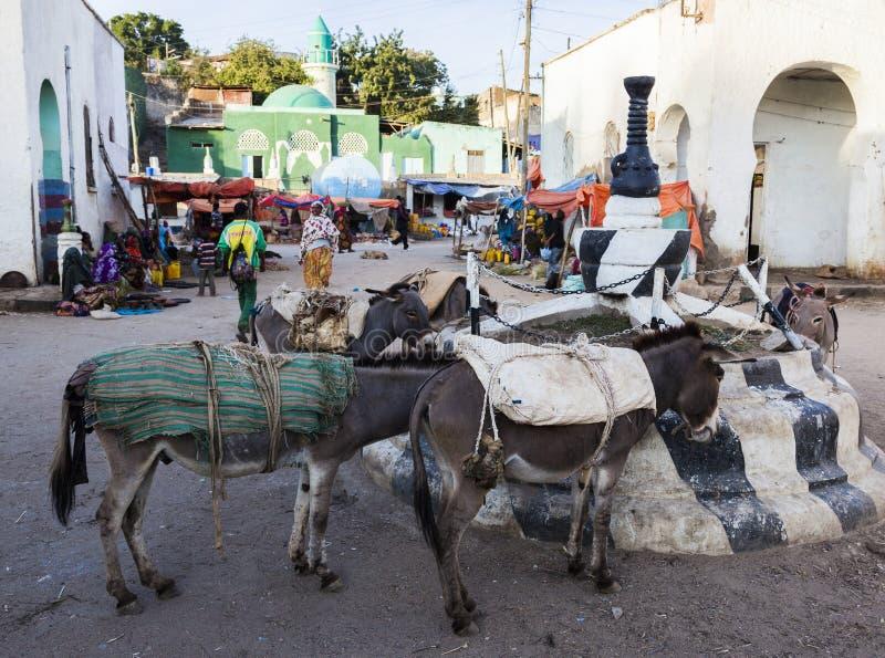 驴在集市广场等待被装载在市Jugol 哈勒尔 埃塞俄比亚 免版税库存图片