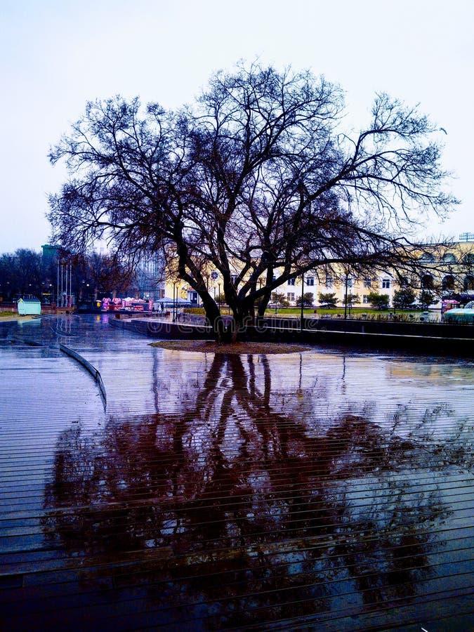 在雨以后的一棵树 库存图片