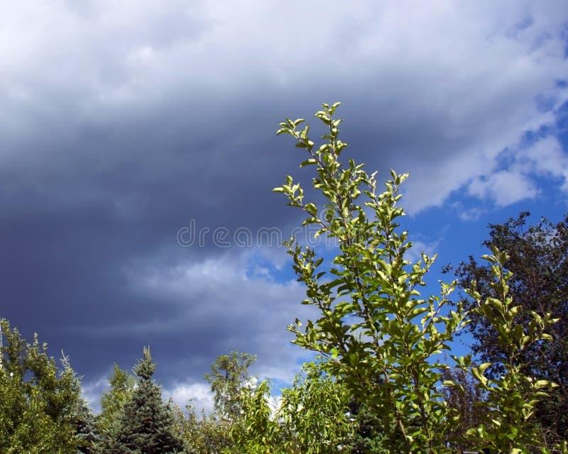 在雨以后的天空 天空蔚蓝和灰色雨云 图库摄影