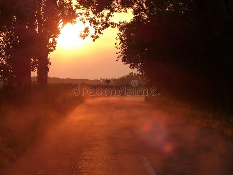 在雨以后的有雾的日落森林公路 图库摄影