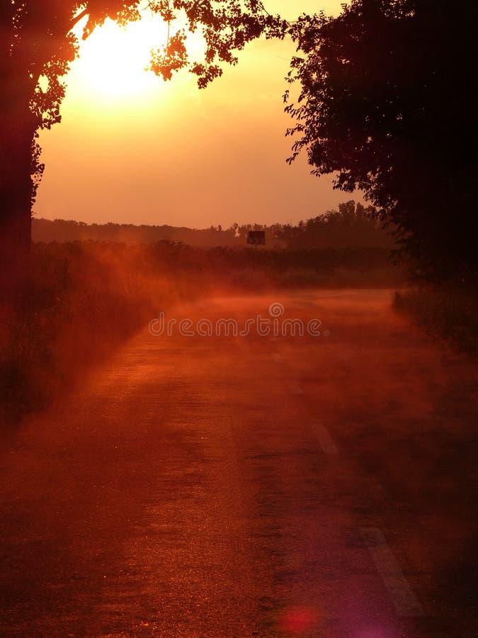 在雨以后的有雾的日落森林公路 库存照片