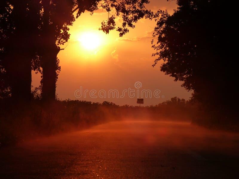 在雨以后的有雾的日落森林公路 库存图片