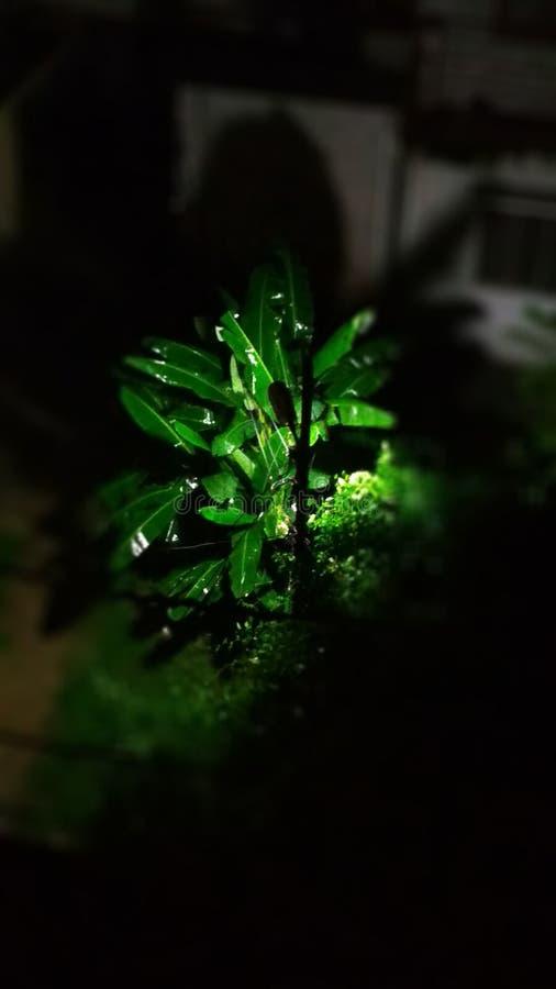 在雨以后的树 图库摄影
