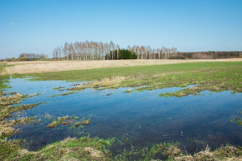 在雨以后的水在一个绿色大领域 库存图片