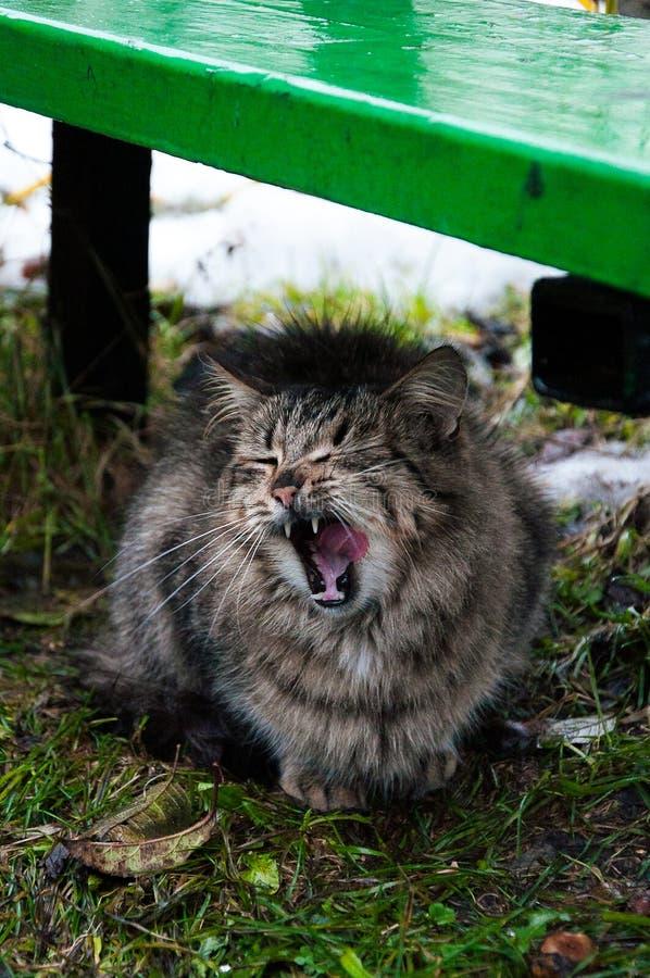 在雨以后的滑稽的猫 库存图片