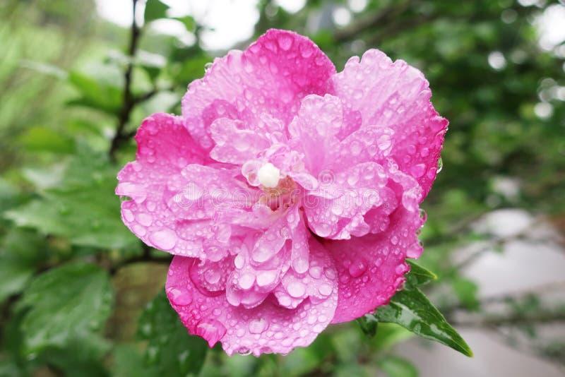 在雨以后的紫色花 免版税库存照片